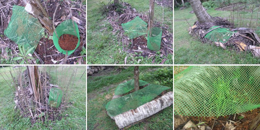 Images of         anti-chicken netting to protect crops