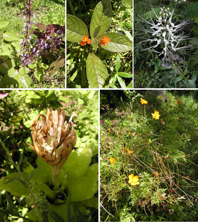 Images of Flowers Blooming and going to             seed