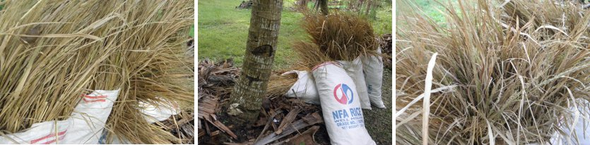 Images of sacks with ricestraw