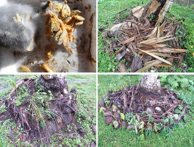 Images of           (mouldy) Squash seeds -and locations planted