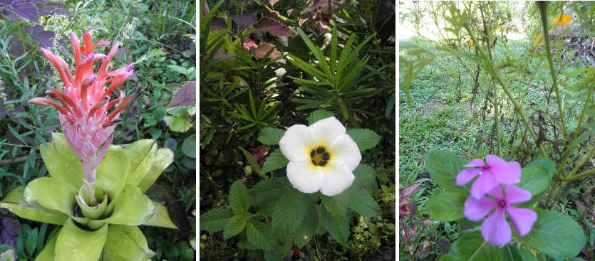 Images of december flowers